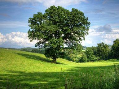 Oak – Year 1